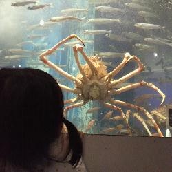 魚っ知館④