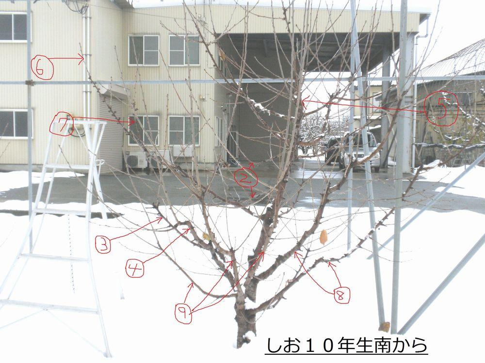 PC1313c1.jpg