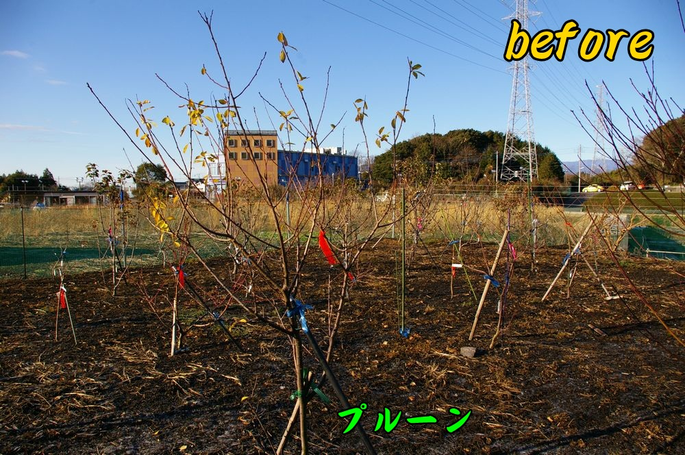 before0104c3.jpg