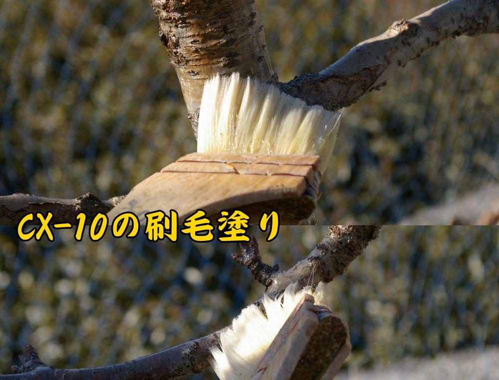 cx0126c1.jpg