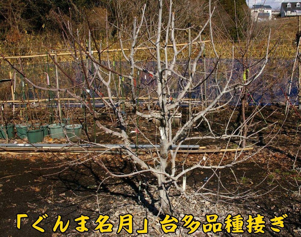 gunma0118c1.jpg