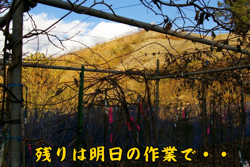 kiui1212c4.jpg