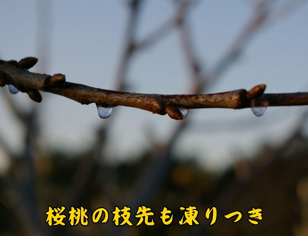 koru0118c1.jpg