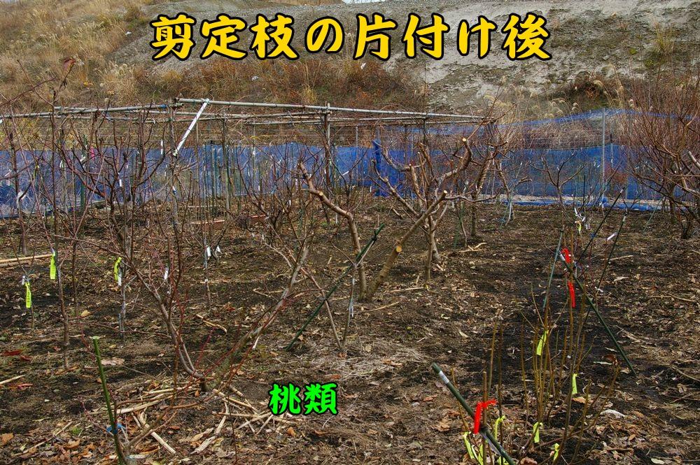 momo0105c1.jpg
