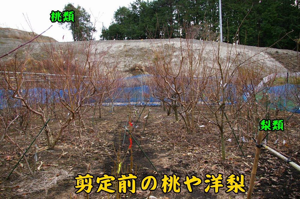 momo_sumo0103c2.jpg
