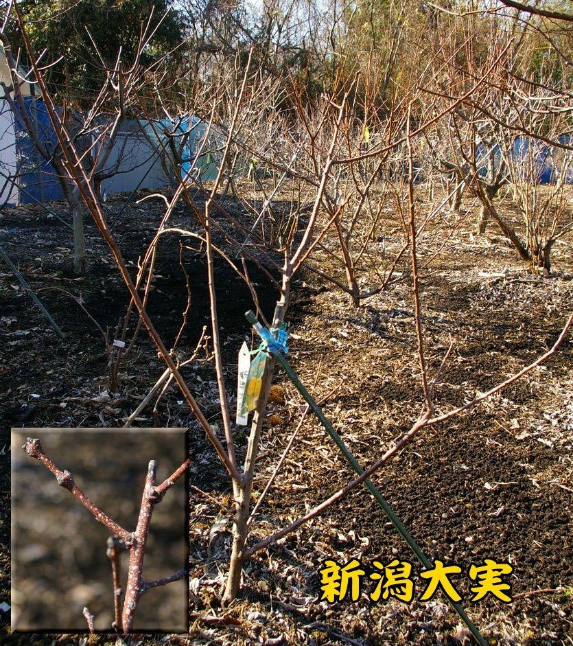 nigata0120c1.jpg