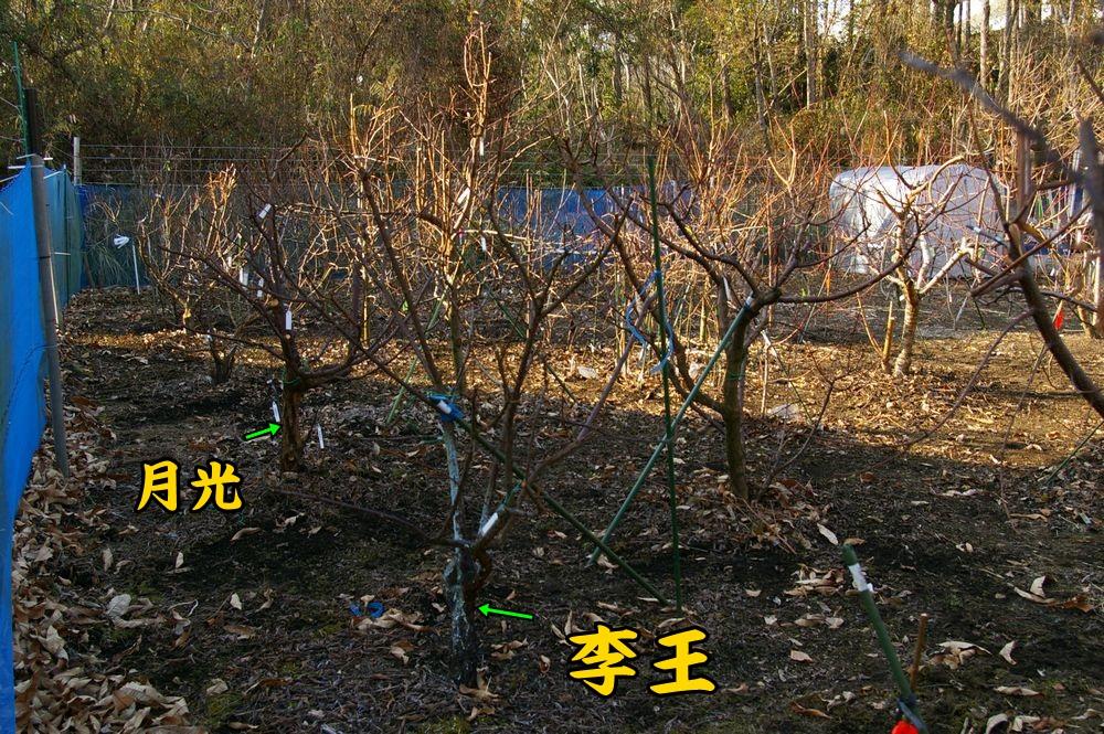 ri_ge_shu_bi0109c1.jpg