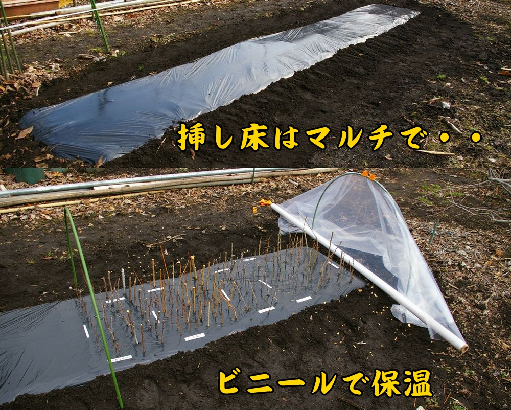 sasiki0205c1.jpg