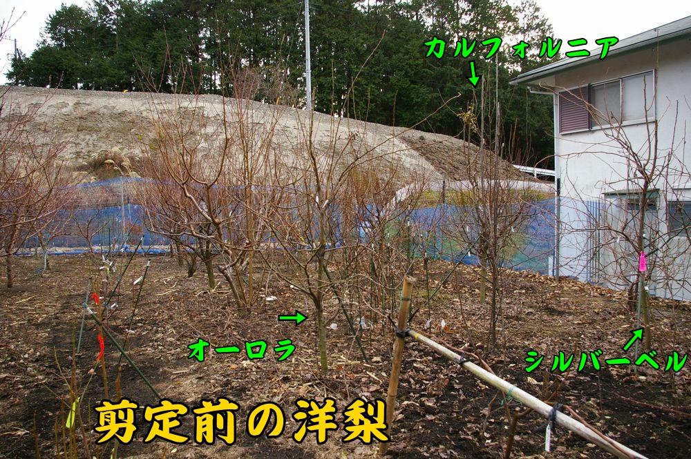 sumo_nasi0103c1.jpg