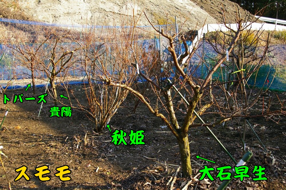 sumomo0109c2.jpg
