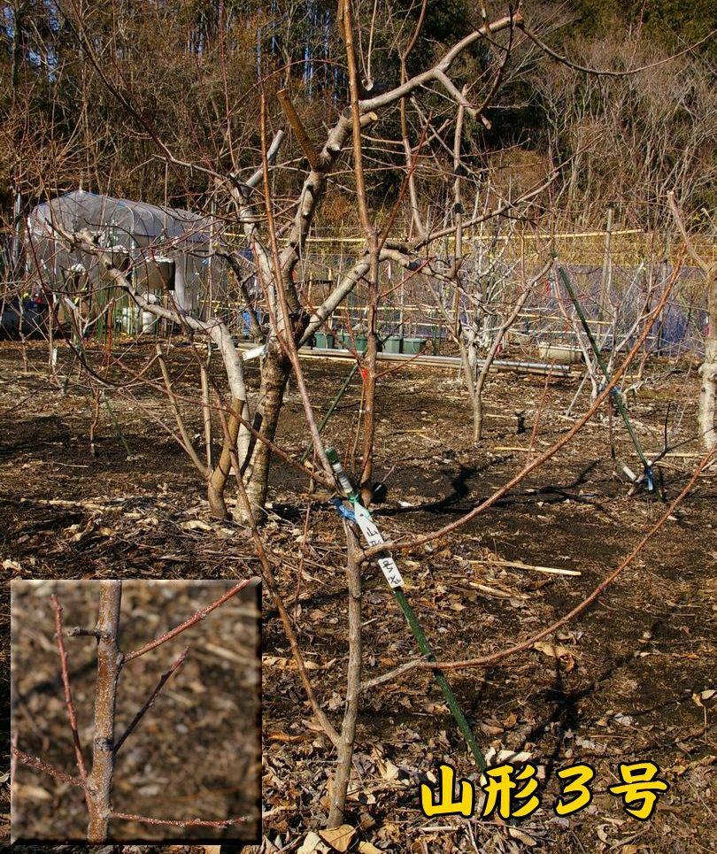yamagata0120c1.jpg