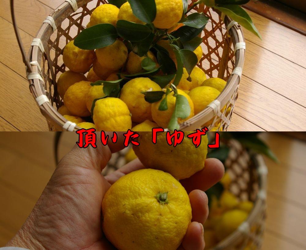 yuzu1221c1.jpg
