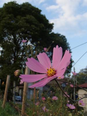 s-PA270153.jpg