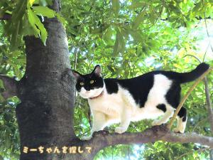 木の上のたま