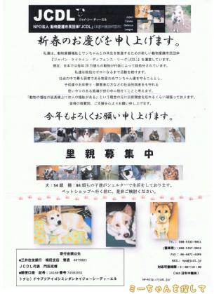 NPO法人動物愛護市民団体JCDLから年賀の手紙
