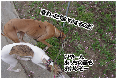 20120416_4.jpg