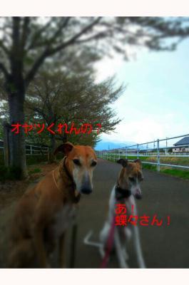 20120424_131219.jpg