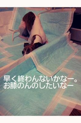 20120424_132157.jpg