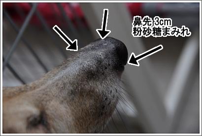 20120702_5.jpg
