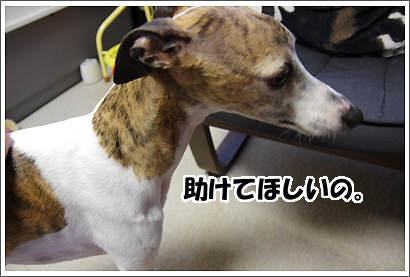20120919_1.jpg