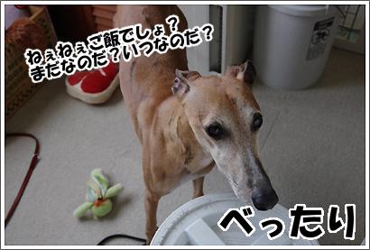 20120923_9.jpg