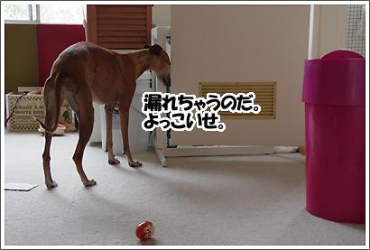 20121114_10.jpg