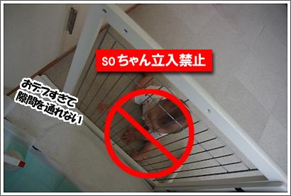 20121114_9.jpg