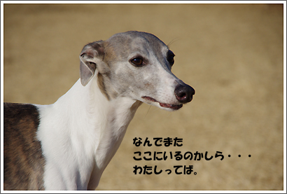 20121219_6.jpg