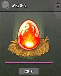 卵を調べる フェニックスの卵孵化 19