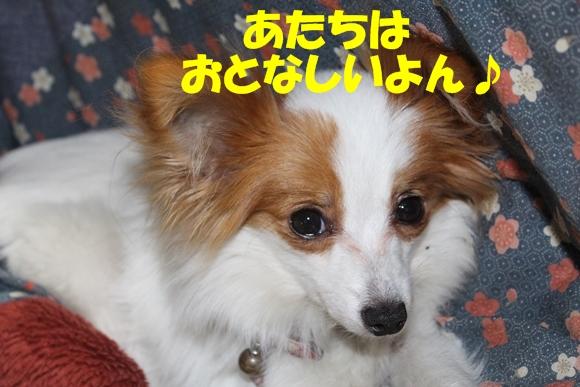10_20130420003930.jpg