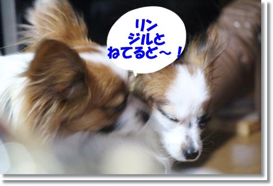 2_20130127011203.jpg