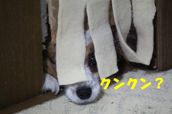 2_20130221195956.jpg