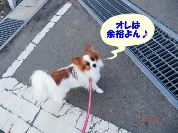 8_20130218193944.jpg