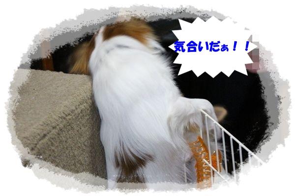 IMG_0522.jpg