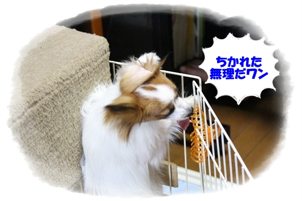 IMG_0526.jpg