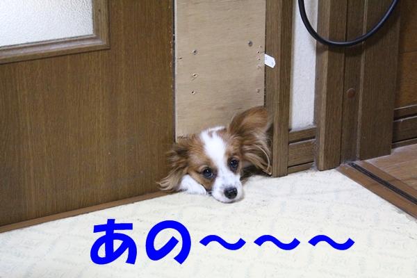 IMG_0897.jpg
