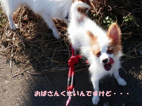 PA050382_20121005100820.jpg