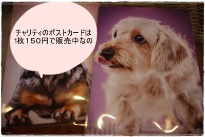 postcard_photoex201302