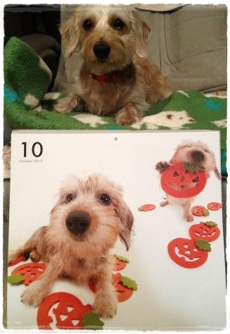 miel_calendar2013