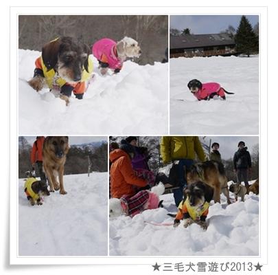 page_yuki2013_7