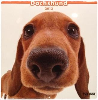 the_dog_calendar_year_2013