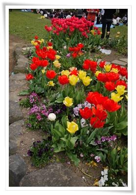 yoyogi_tulip