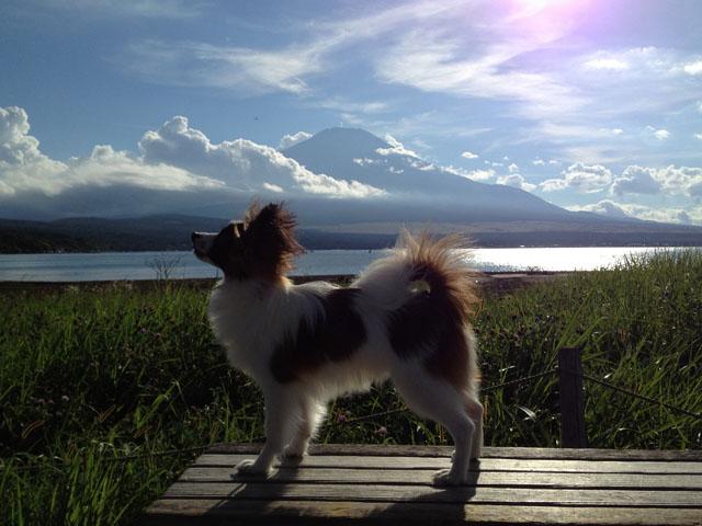 岳くんと富士山