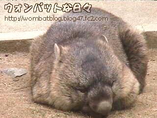 w0575(お外でお昼寝)