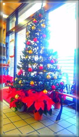 クリスマスツリーとポン子。
