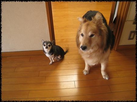 ユウタ&チャポリ