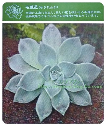P1050677-vert.jpg