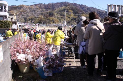 IMG_4219_convert_20130224115300桜の枝
