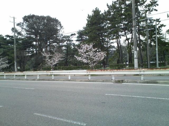 Hamako5.jpg