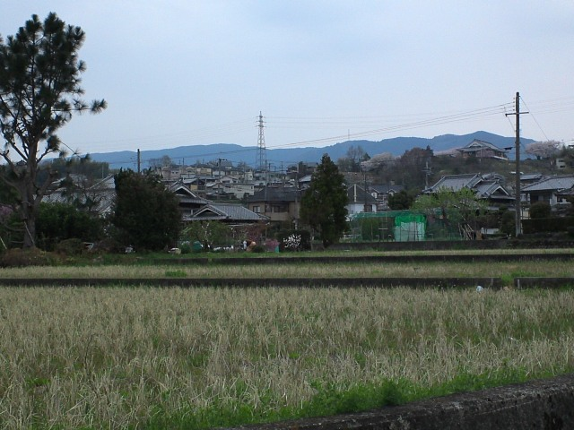 Hashimoto09.jpg